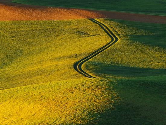 Wheat and Pea Fields-Darrell Gulin-Photographic Print