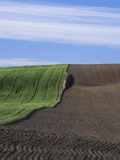 Wheat Field and Plowed Land-Frank Lukasseck-Photographic Print