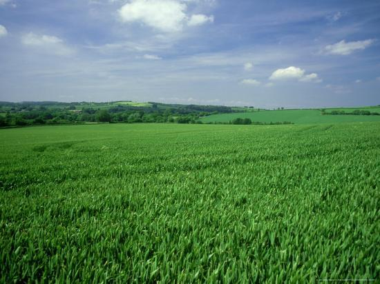 Wheat Field in Summer-Mike England-Photographic Print