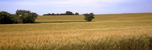 Wheat Field, Kansas, USA