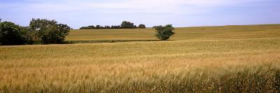 Wheat Field, Kansas, USA--Photographic Print