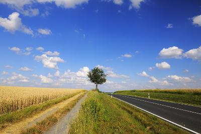 Wheat Field, Summer, Marktheidenfeld (Town), Franconia, Bavaria, Germany-Raimund Linke-Photographic Print