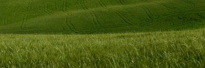 Wheat Fields in Tuscany-Raul Touzon-Photographic Print