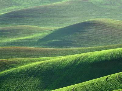 Wheat Springs in the Hills of the Palouse Country, Idaho, USA-Chuck Haney-Photographic Print