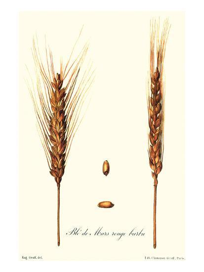 Wheat-Philippe-Victoire Leveque de Vilmorin-Art Print