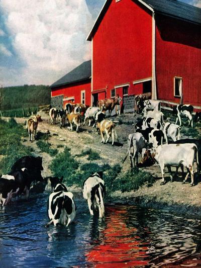 """When the Cows Come Home,""August 1, 1948-J. Julius Fanta-Giclee Print"
