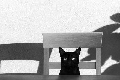 Where Is My Coffee?-Jon Bertelli-Photographic Print