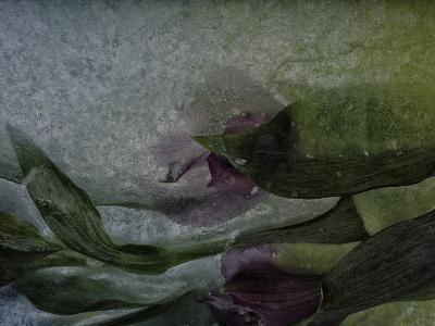 Where Mermaids Hide-Zina Zinchik-Art Print