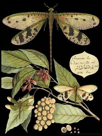 https://imgc.artprintimages.com/img/print/whimsical-dragonfly-on-black-i_u-l-p8lndx0.jpg?p=0