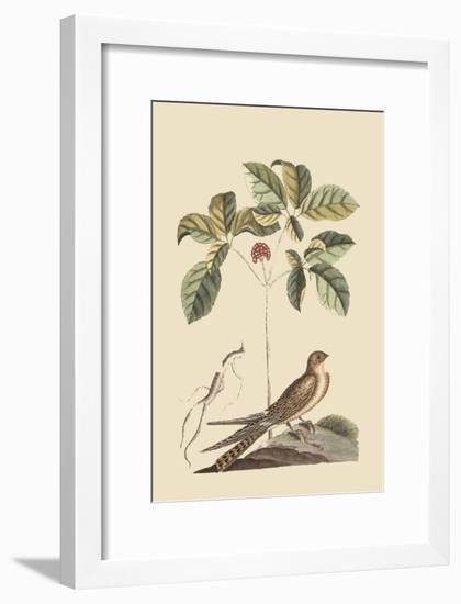 Whipoorwill-Mark Catesby-Framed Premium Giclee Print