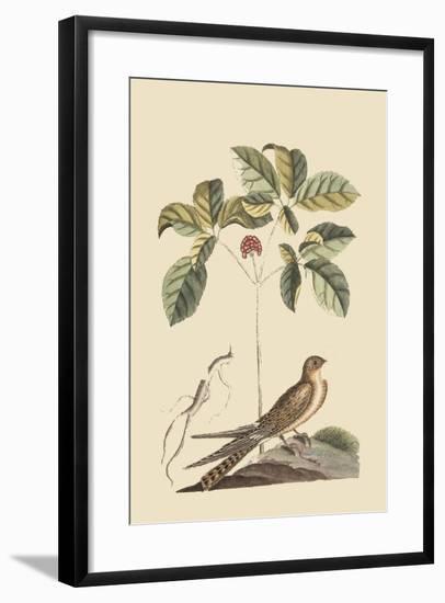 Whipoorwill-Mark Catesby-Framed Art Print