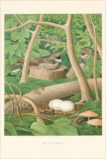 Whippoorwill Nest and Eggs--Art Print