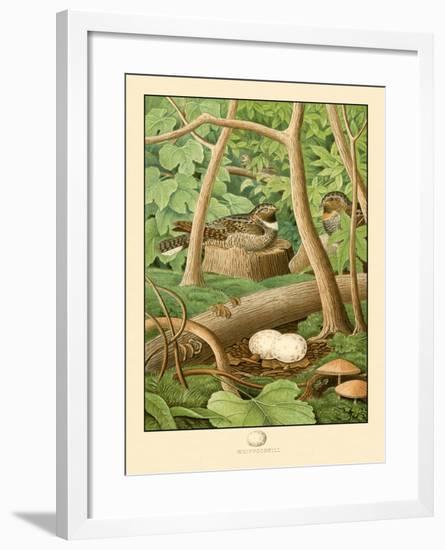 Whippoorwill--Framed Art Print
