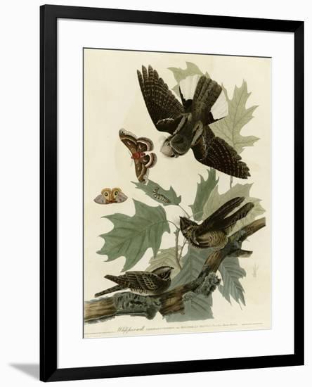 Whipporwill--Framed Giclee Print