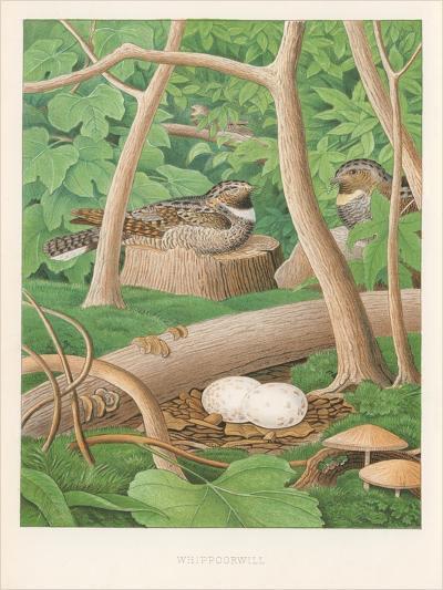Whipporwills, Eggs--Art Print