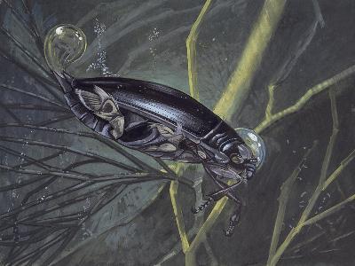 Whirligig Beetle in Water (Gyrinus Natator)--Giclee Print