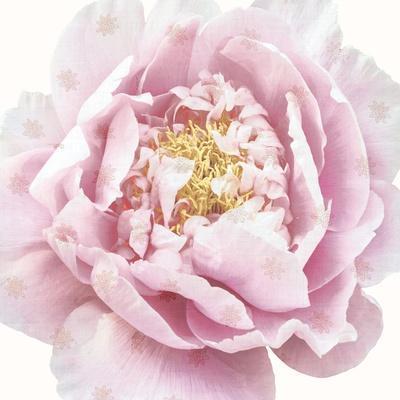 https://imgc.artprintimages.com/img/print/whisper-floral_u-l-q13ij2o0.jpg?p=0