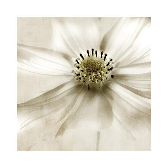 Whisper of Cosmos-Donna Geissler-Giclee Print