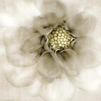 https://imgc.artprintimages.com/img/print/whisper-of-dahlia_u-l-f5m8yo0.jpg?p=0