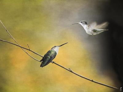 Whisper of Your Wings Hummingbirds-Jai Johnson-Giclee Print