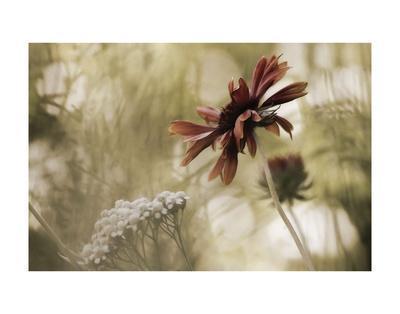 https://imgc.artprintimages.com/img/print/whisper-on-the-wind_u-l-f8crqh0.jpg?artPerspective=n