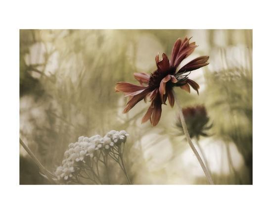 Whisper on the Wind-David Lorenz Winston-Art Print