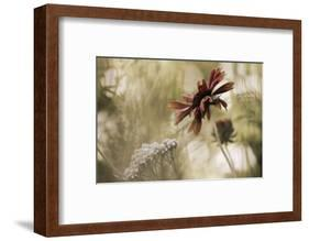 Whisper on the Wind-David Lorenz Winston-Framed Art Print
