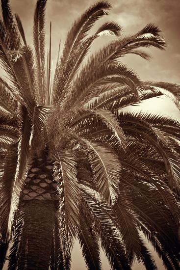 Whispering Palm-Jennifer Broussard-Art Print