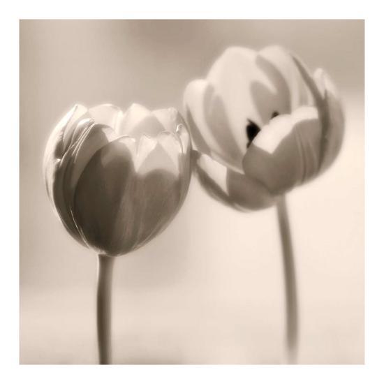 Whispers-Donatella Tandelli-Art Print