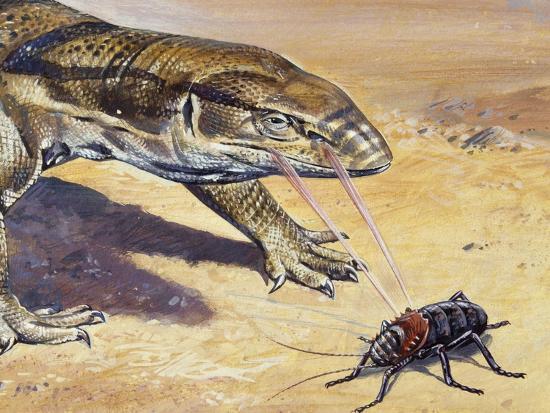 Whistle Cricket (Eugaster Spinulosa), Tettigoniidae, Drawing--Giclee Print