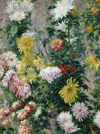 White and Yellow Chrysanthemums, 1893-Gustave Caillebotte-Giclee Print