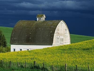 White Barn and Canola Field-Darrell Gulin-Premium Photographic Print