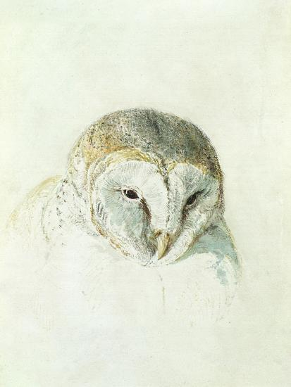 White Barn Owl, from the Farnley Book of Birds, C.1816-J^ M^ W^ Turner-Giclee Print