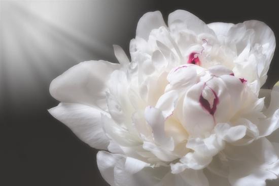 White Beauty-Philippe Sainte-Laudy-Photographic Print