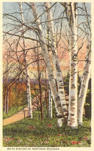 White Birches of Northern Michigan