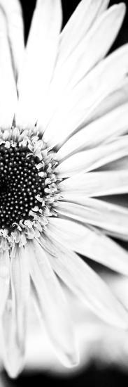 White Bloom I-Susan Bryant-Photographic Print