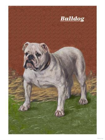 https://imgc.artprintimages.com/img/print/white-bulldog_u-l-p2aozo0.jpg?p=0