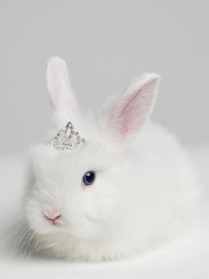 White Bunny Rabbit Wearing Tiara Close Up Studio Shot