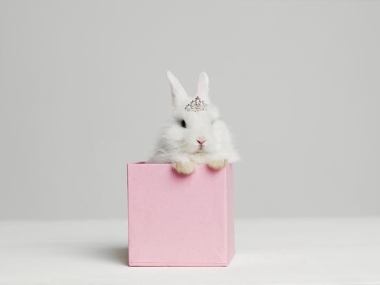 White Bunny Rabbit Wearing Tiara Sitting in Pink Box, Studio Shot-Roger Wright-Photographic Print