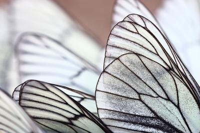 https://imgc.artprintimages.com/img/print/white-butterflies-on-sand_u-l-q1a31pd0.jpg?p=0