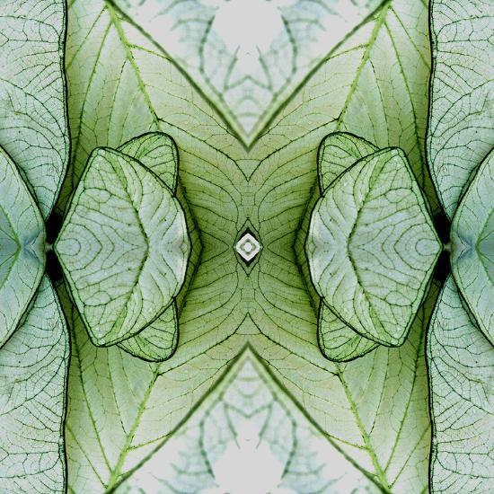 White Caladium 3-Rose Anne Colavito-Art Print