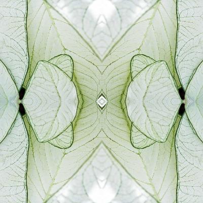 White Caladium-Rose Anne Colavito-Art Print