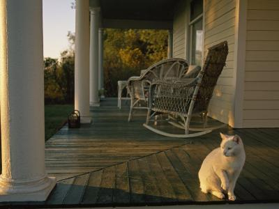White Cat in Sunlight on a Columned Porch of a Historic Farmhouse-Joel Sartore-Photographic Print