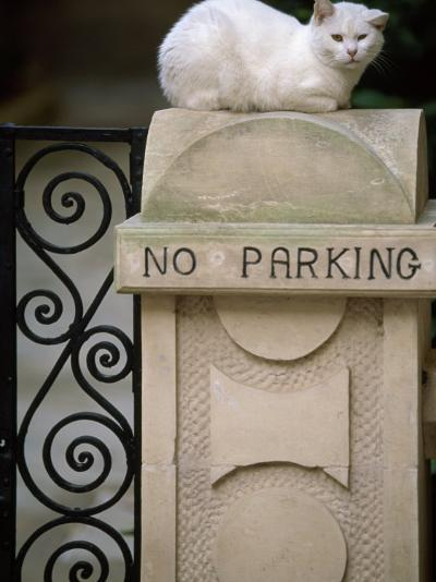 "White Cat Sits on a ""No Parking"" Sign-Michael Melford-Photographic Print"