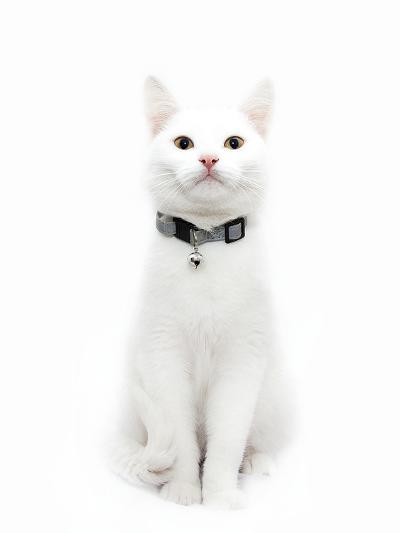 White Cat-Maja Hrnjak-Art Print