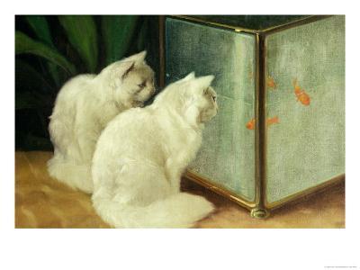 White Cats Watching Goldfish-Arthur Heyer-Giclee Print