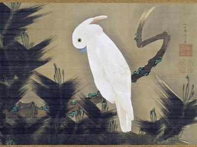 White Cockatoo on a Pine Branch-Ito Jakuchu-Giclee Print