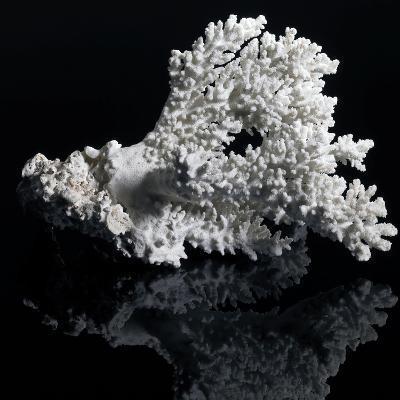 White Coral-prill-Art Print