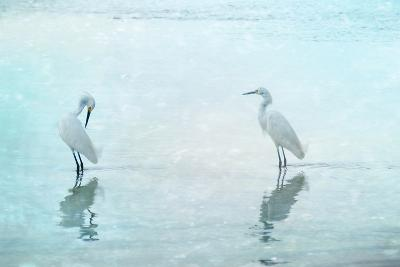 White Cranes-Hannes Cmarits-Photographic Print