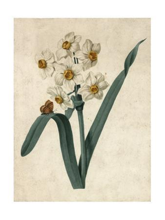 White Daffodils on Green Stem with Butterfly